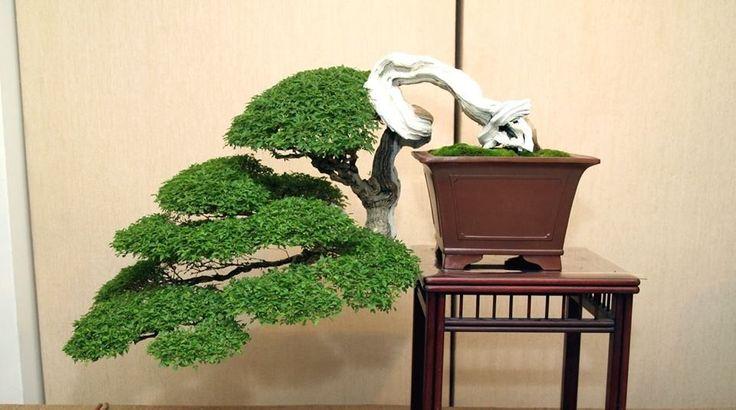 Something jade indica training of