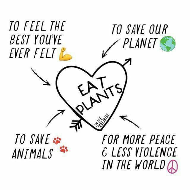 Famous Animal Rights Quotes: 17 Best Vegetarian Quotes On Pinterest