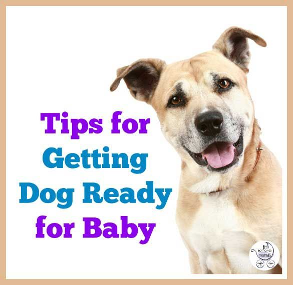 Things Jenn did to prepare a skittish dog for a new baby! | Fit Bottomed Mamas