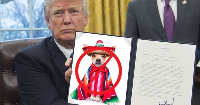 Donald Trump Signs Executive Order Cancelling Cinco De Mayo - http://runt-of-the-web.com/no-more-cinco-de-mayo?utm_source=Pinterest&utm_medium=social&utm_campaign=twitter_snap