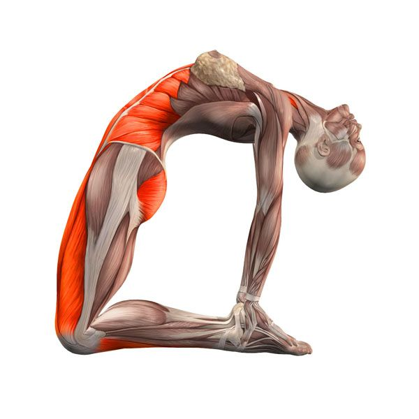 Camel pose, palms set against feet - Ustrasana advanced ...