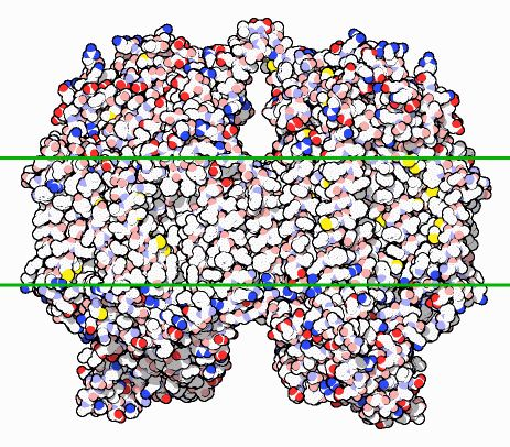 cytochrome - an enzyme used to detoxify cells that is created by bacteria