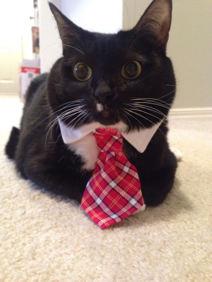 142 best Animals Wearing Ties images on Pinterest | Bow ...