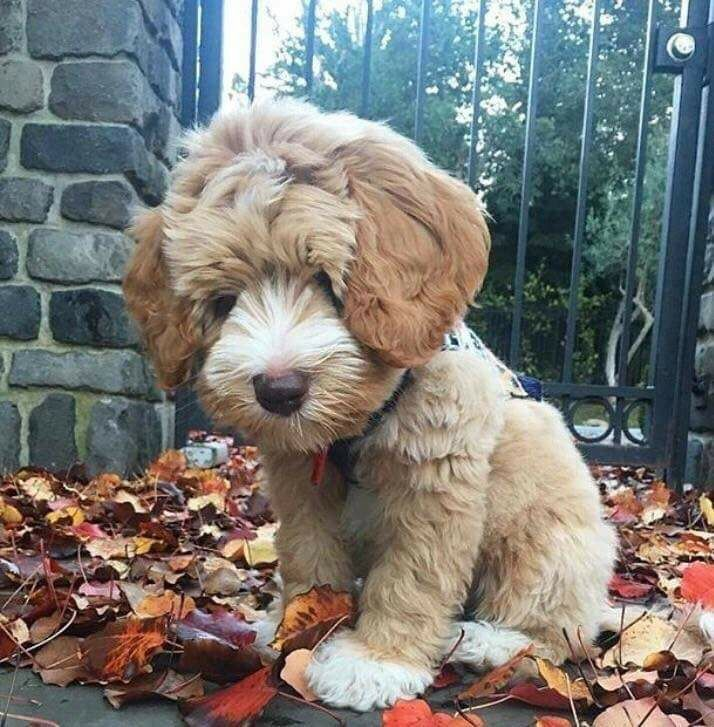 Pin by PET SHOP on Animals and pets | Dogs, Cute animals