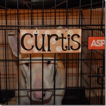 Name Tags For Dog Crates Cute Dog Stuff Dog Name
