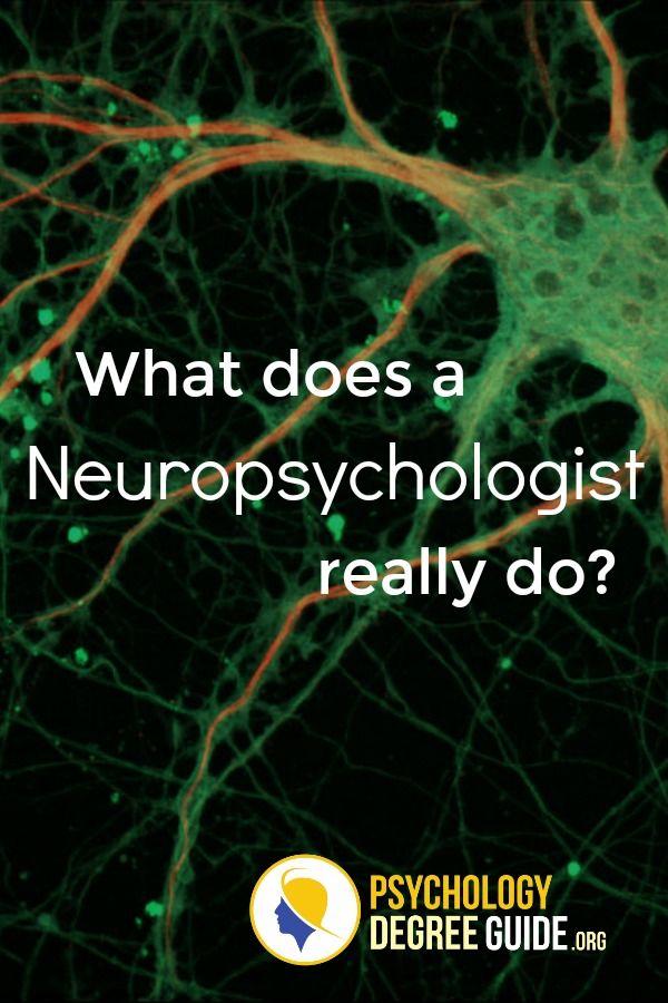 Neuropsychology Programs Psychology Degree Guide Psychology Degree Neuropsychology Psychology