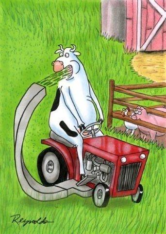 a heifer's gotta do what a heifer's gotta do...