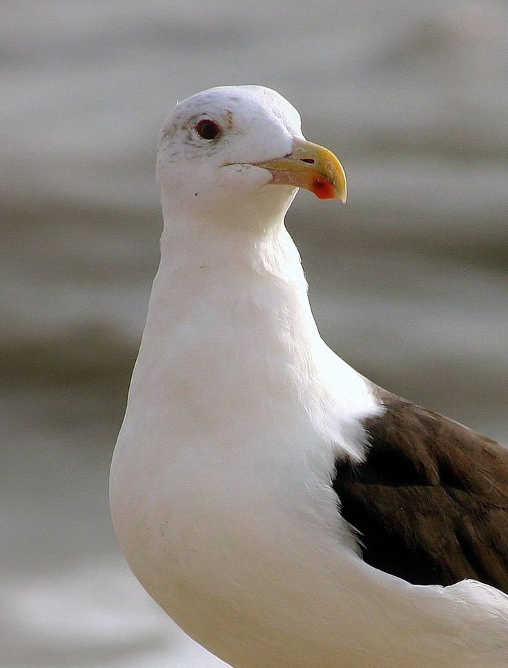 Jonathan Seagull Discovered That Boredom And Fear Anger Are The Reasons A Gulls