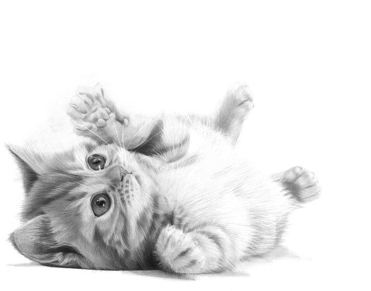 Puddy Cat Pencil Drawing | KevsArt.com