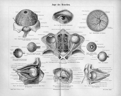 "1894 ANATOMY HUMAN EYE Antique Engraving Print.  Original old German wood engraving print/double page book plate.   This is authentic antique(not a modern reproduction)beautiful print comes from a German lexicon.    Printed by Bibliographisches Institut Leipzig,Germany,1894. The overall size of this print with margins approx 12"" x 10"" inches."