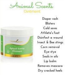 17 Best Ideas About Young Living Pets On Pinterest Young