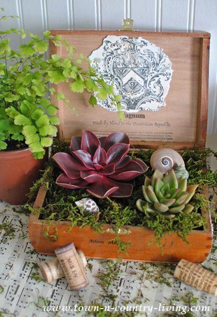 DIY Cigar Box Planter with Succulents