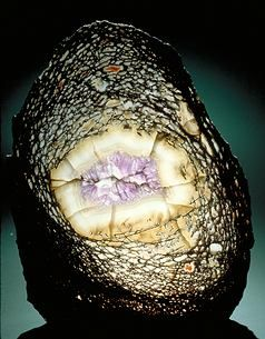 Quartz / Amethyst replacing dinosaur bone. | Gems, minerals and stones | Pinterest | Minerals, Fossils and Gems and minerals