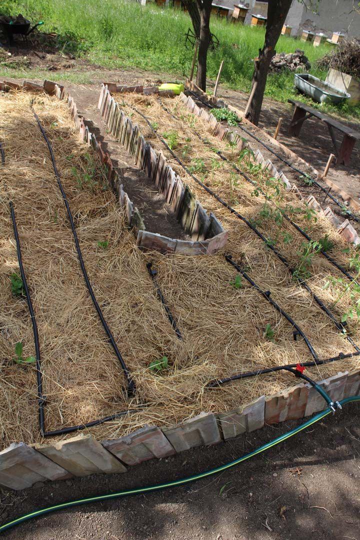 irrigation for raised bed - Závlaha pre vyvýšený záhon