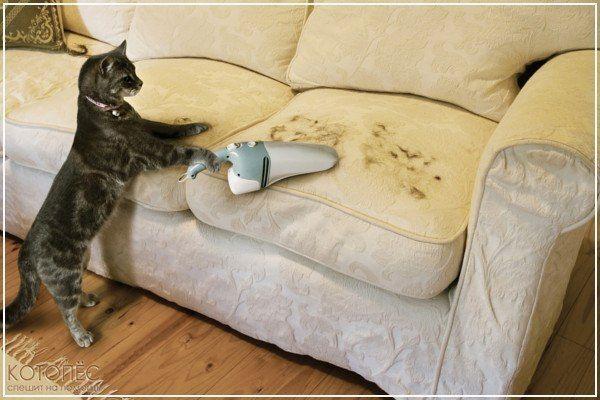 как вывести кошачью мочу с мебели