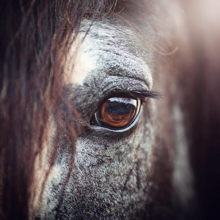 """Polubienia: 1,146, komentarze: 10 – Horses Mad (@horses.mad) na Instagramie: """"""""A true horseman does not look at the horse with his eyes, he looks at his horse with his heart"""" ❤️…"""""""
