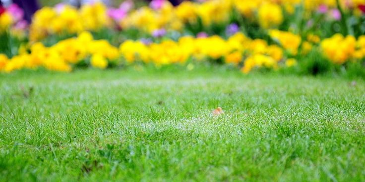 Livre o seu relvado do musgo | SAPO Lifestyle