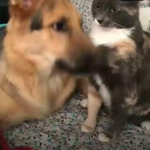 Litter Locker Cat Mat Really Funny Dog Videos Funny Dog Photos