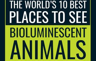 Best Places to See Bioluminescent Animals