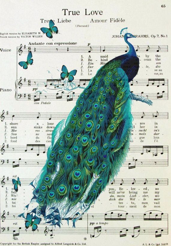 Peacock Vintage Bird Illustration printed on book by OnceTattered, $10.00