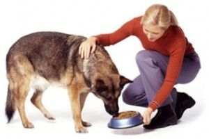 The Best High-Quality Dog Food Brands