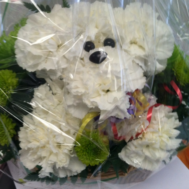 Dog Flowers | floral arrangements | Arranjos de flores ...