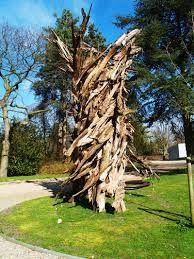 kunst met boomschors