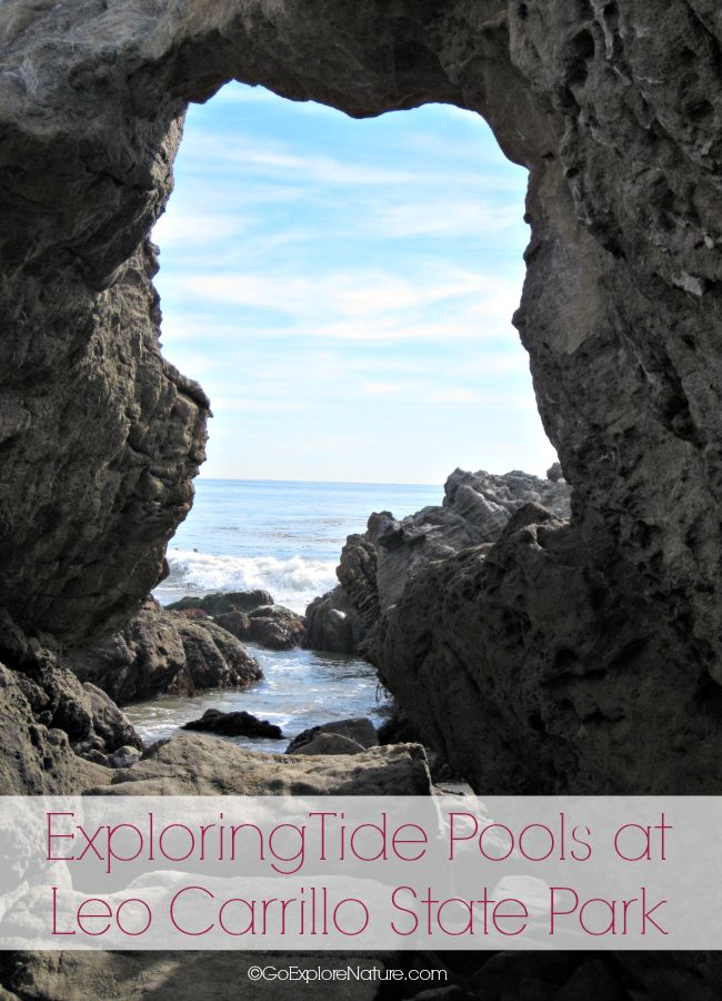 Exploring tide pools at Leo Carrillo State Park is a fun way for Los Angeles families to spend the day. See marine critters, explore sea caves and more!