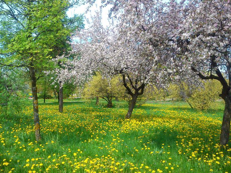 park na wiosnę