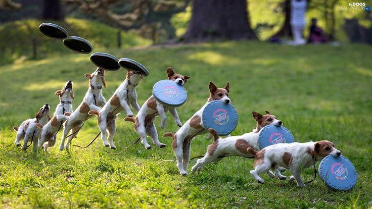 Ένα ενδιαφέρον σεμινάριο εκπαίδευσης σκύλων... περπάτημα και βόλτα για καλό σκοπό .... μια συνάντηση για παιχνίδι... αυτά και άλλα πολλά γίνονται αυτό .....