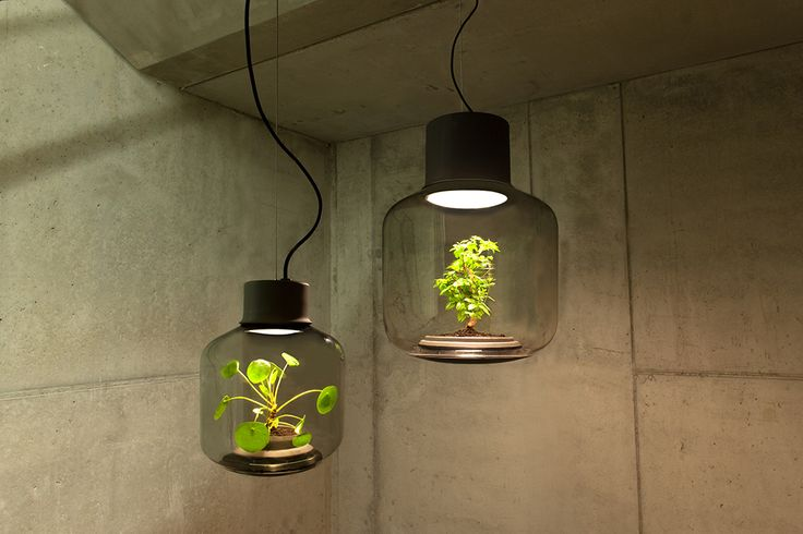 Lamp multi-tasking as a terrarium allows plants to grow in sunlight-starved spaces.  No window? No problem.