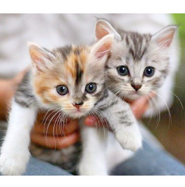 I Ll Save You Buddy Kittens Cutest Cute Animals Kittens