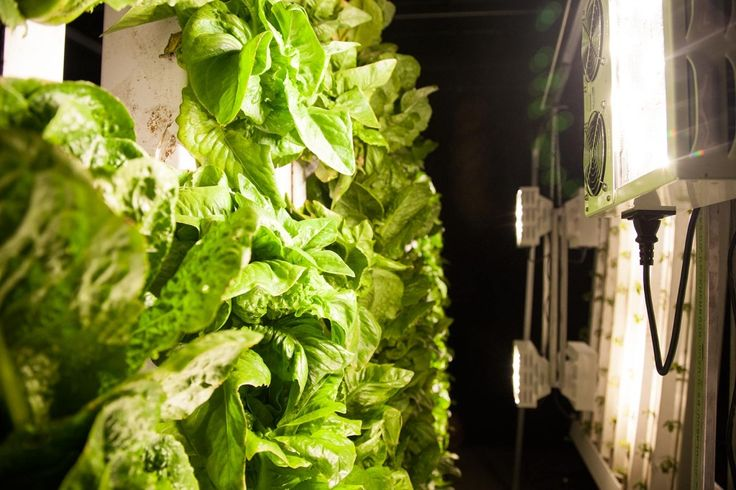 6 Things to Consider When Starting a Vertical Farm