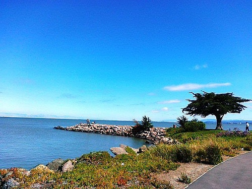At the Bay Trail in Point San Bruno Park, San Bruno, California  #SanBruno