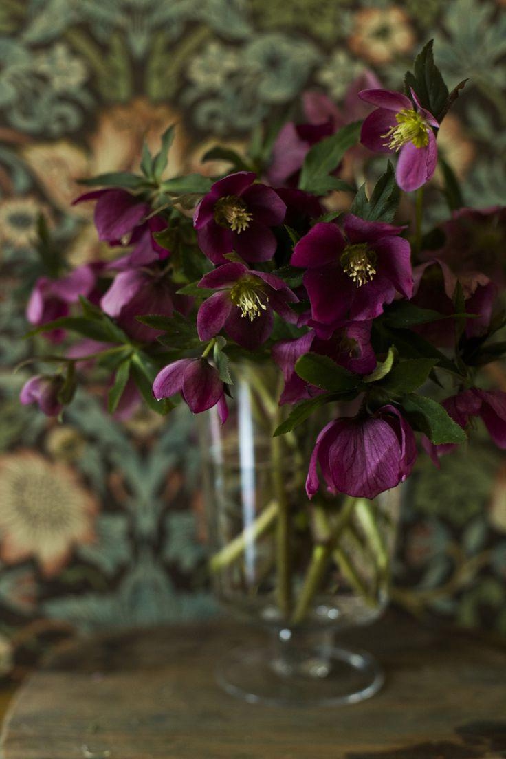 Flower arrangement ~ purple hellebores