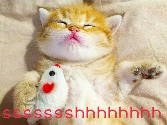 QUIET #candycat #cats #cat