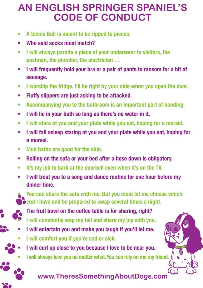 English Springer Spaniel's funny Code of Conduct. Rules for living with your Springer as written by a Springer Spaniel.