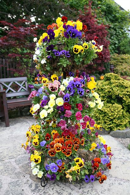 pansy tower. love this./ATTRACTS: Hummingbirds. Buy plants in early Spring or Fall with little blooms or no blooms. Do not over water.