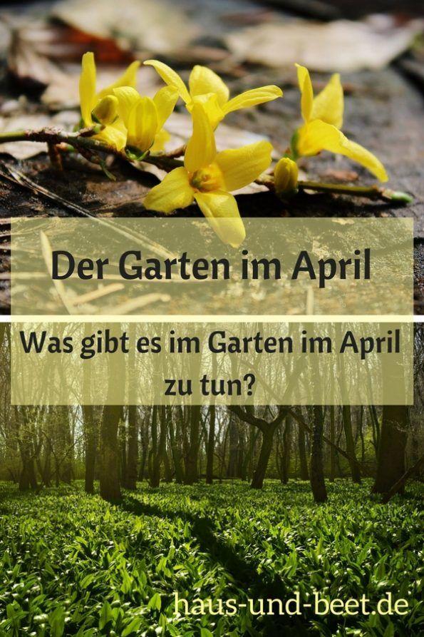 Was Gibt Es Im Garten Im April Zu Tun Garten Garten Anlegen Gartenarbeit