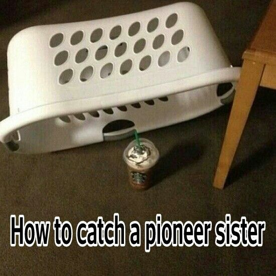 How to catch a pioneer sister. Yup this is about right for us that pioneer.