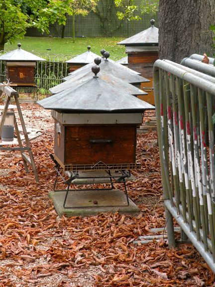 Bee hives in Luxembourg Gardens have healthier bees than commercial hives.