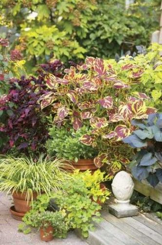Colorful Shade Tolerant Plants