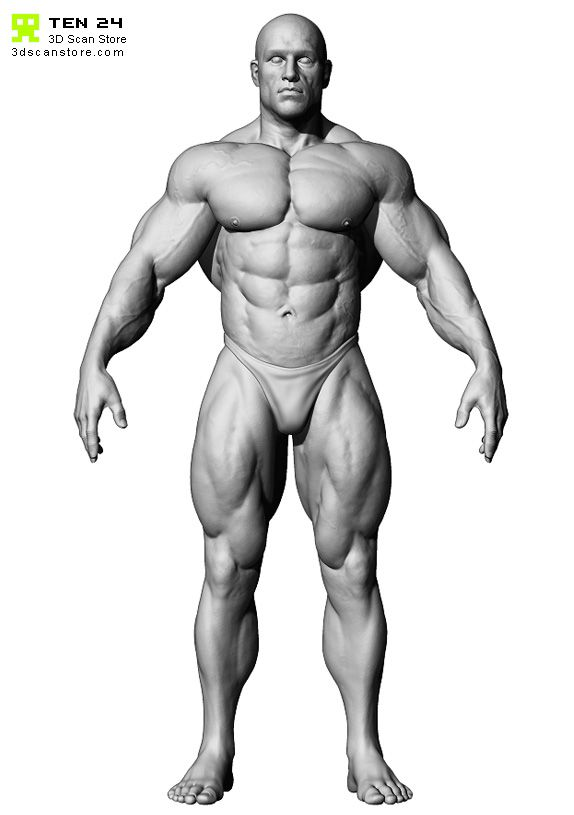 Male Body Builder