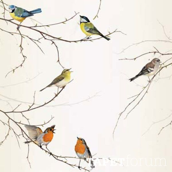 Birds 302-1014