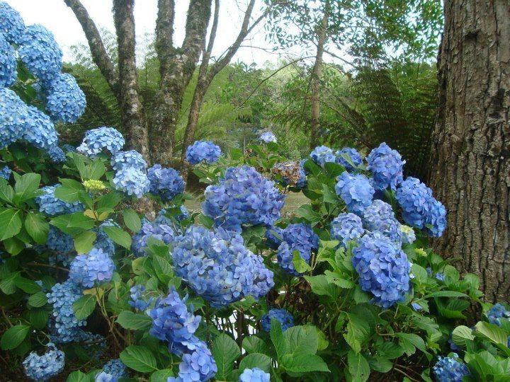 Bom dia!     Demorei mas cheguei com minhas flores e esmalte. Eu passei Ipê lilás da Blant Colors, lavei louça e estraguei antes de fotogra...