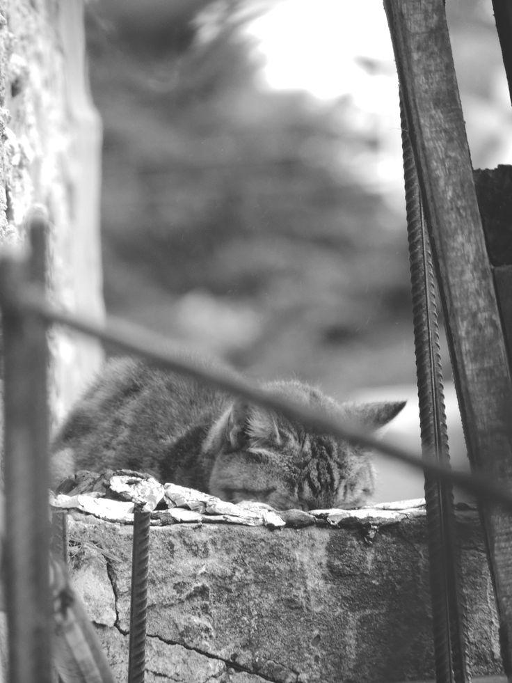 Catnap :3