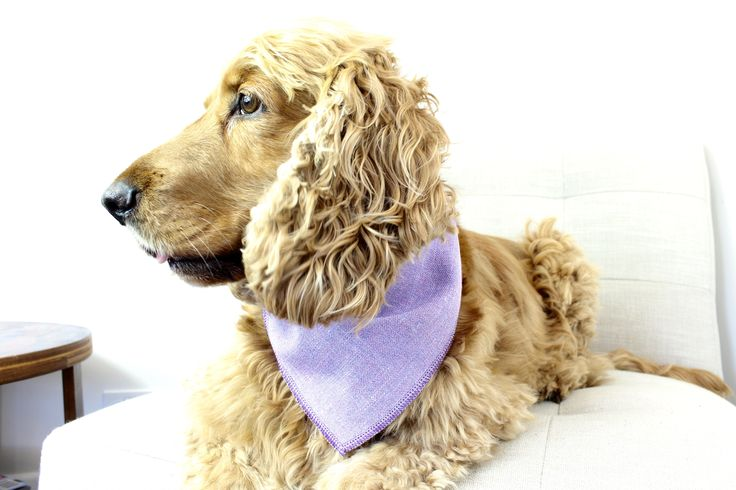 Purple Soho