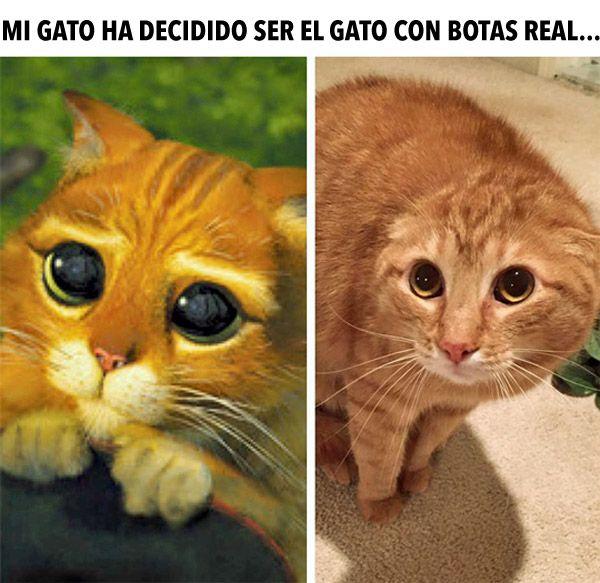 El Gato con Botas Real