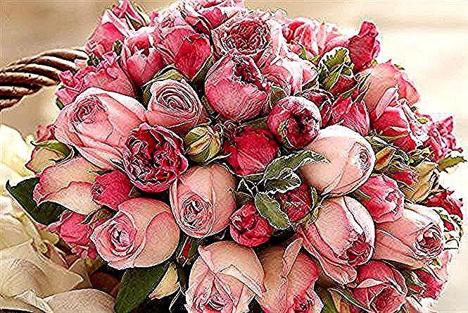 Rose Rosa Bouquet Di Rose Foto Bellissimi Mazzi Di Fiori Bellissimi Bouquet In 2020 Succulents Plants