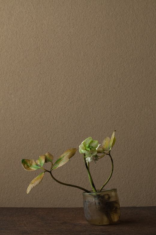 2012年4月27日(金)   名残の春の絶唱。   花=クリスマスローズ   器=ローマングラス碗(ローマ時代)